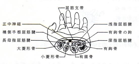 手根管断面図