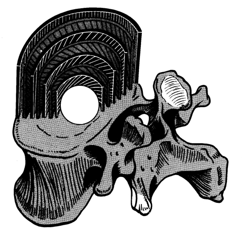 椎間板線維輪の構造